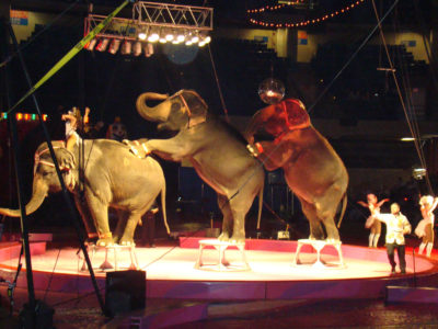 elephants-at-circus-by-katherine-johnson