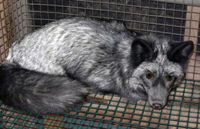 fur-farm-flavio-brandani