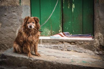 sad-dog-by-christian-siedler