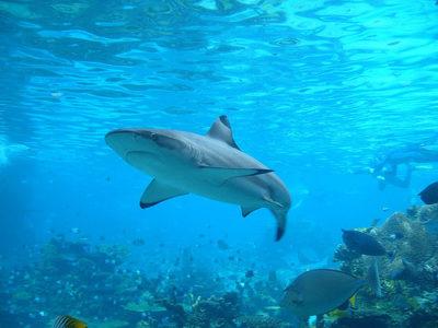 shark-by-allan-lee