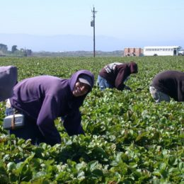 Demand Ban on Toxic Pesticide