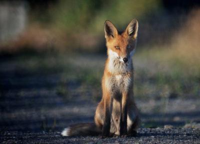 fox-john-leffmann