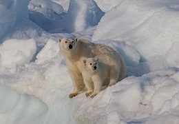 Save Polar Bear Habitat by Reducing Greenhouse Gas Emissions