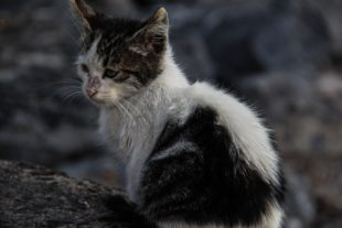 Demand Stronger Animal Cruelty Laws After Cat Burned to Death