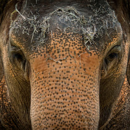 Don't Let Zoo Euthanize Elephant Who Isn't Suffering