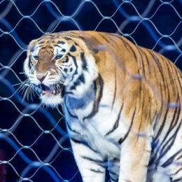 Don't Host Circus That Uses Barbaric Animal Stunts