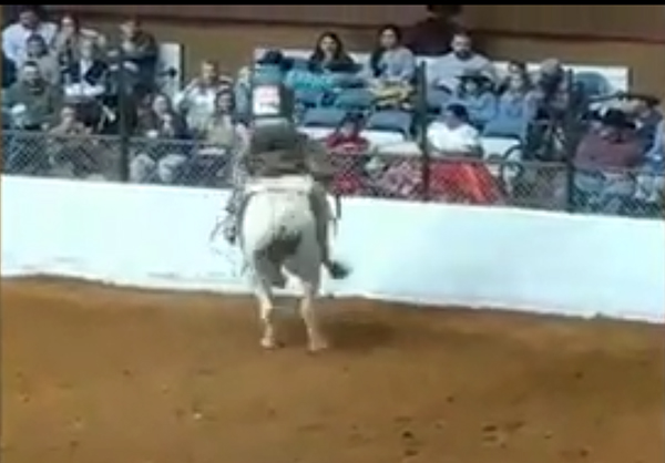Shut Down And Investigate Deadly Rodeo Forcechange