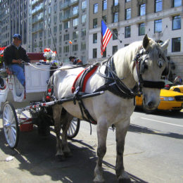 End Cruel, Outdated Horse-Drawn Carriages in New York City