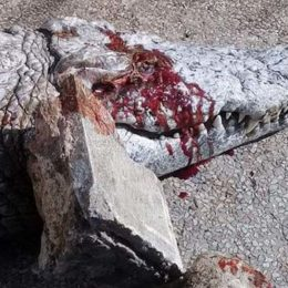 Justice for Crocodile Stoned to Death at Zoo