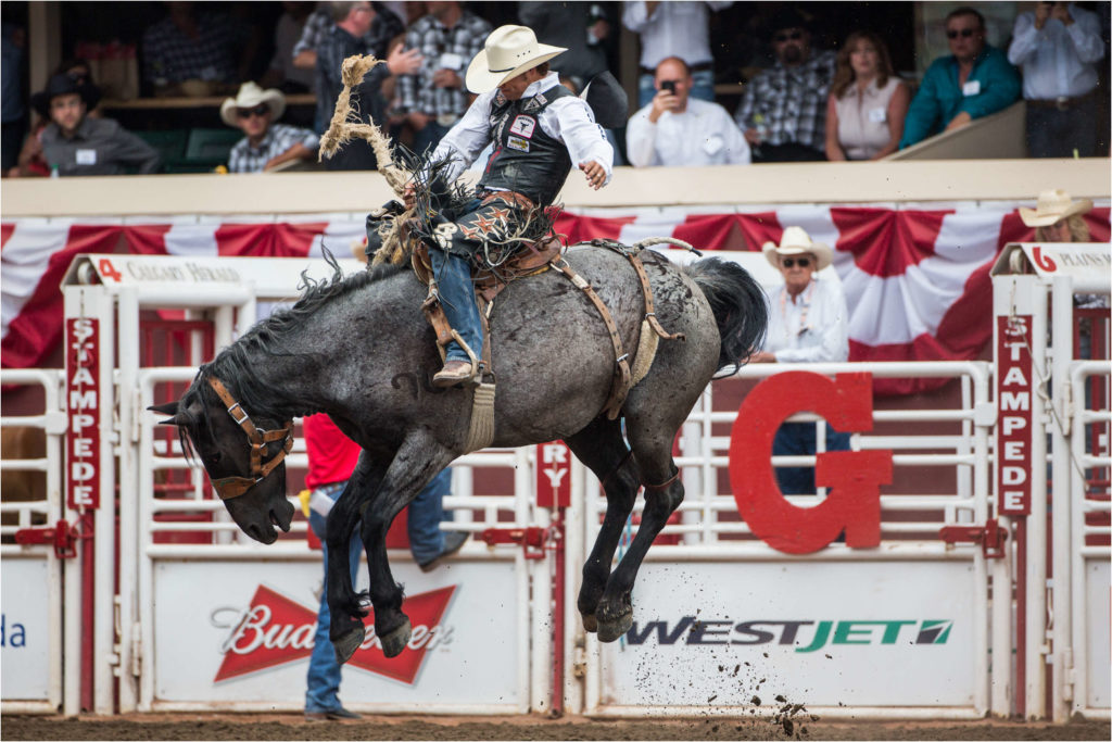 Stop Torturing Rodeo Animals For Entertainment Forcechange