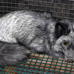 #FurFreeBritain: Stop Funding the Torture and Execution of Millions of Fur Farm Victims