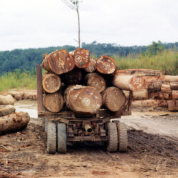 End Rampant Deforestation to Combat Deadly Malaria