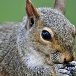 Punish Children Accused of Burning Squirrel to Death