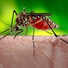 Denounce Cover-Up of Zika Virus Outbreak