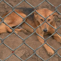 Punish Sanctuary Owner Accused of Neglecting Dogs Until They Died