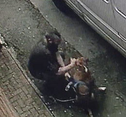 Man Caught on Video Punching Dog Must be Punished