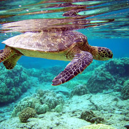Save Sea Turtles From Plastic Straws