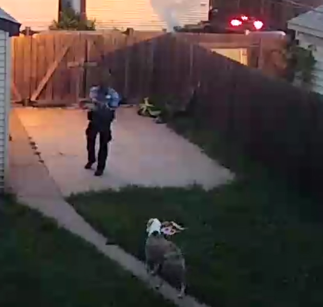 Service Dogs Allegedly Shot By Officer Deserve Justice
