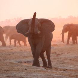Stop Inhumane Elephant Rides