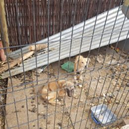 Justice for Dogs Allegedly Starved and Forced to Eat Cage-Mate