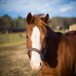 Justice for Horse Allegedly Tied to Truck and Dragged