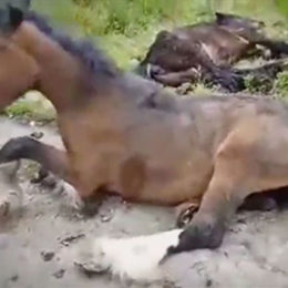 Prevent Ominous Fate for UK's Abandoned Horses