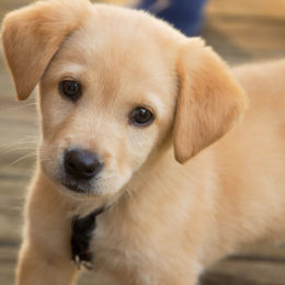 End Commercial Breeding and 'Puppy Mills': Showcase Rescue Animals in Pet Stores