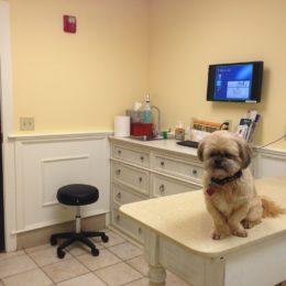 Investigate Veterinarian Accused of Animal Abuse