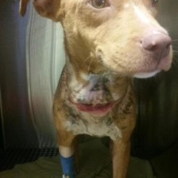 Justice for Emaciated Puppy With Metal Collar Embedded Into Her Neck