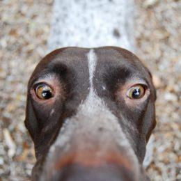 Dog Allegedly Abandoned and Starved Deserves Justice