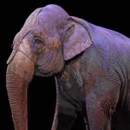 Animal Circus Must Leave Guangzhou Zoo