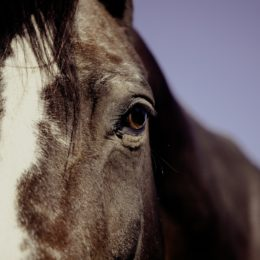 Justice for Horse Allegedly Neglected and Starved