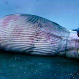 Stop Senselessly Killing Pregnant Whales