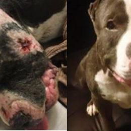 Harshly Punish Dog Fighting Offender