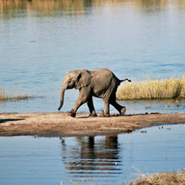 End the Cruel Capture and Export of Baby Elephants