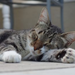 Punish Man Who Allegedly Stomped Girlfriend's Cat to Death