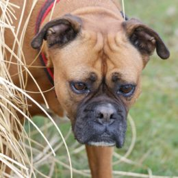 Dogs Allegedly Starved and Neglected Deserve Justice