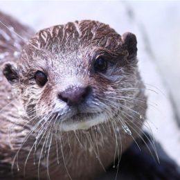 Japan: Ban Wild Animal Cafes and 'Petting Bars'