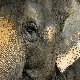 End Ivory Trade in United Kingdom