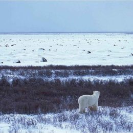 Protect Alaska's Natural Legacy: Do Not Strong-Arm Damaging Drilling onto Arctic Wildlife Refuge