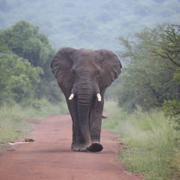 Demand Ivory Ban in the European Union