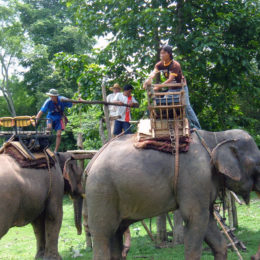 Stop Renaissance Festival from Allowing Elephant Rides