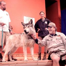 Applaud Punishment of Hollywood Animal Handler