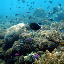 Stop Dangerous Fishing Practice From Destroying Coral Reefs