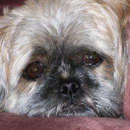 Punish Home Aide Who Allegedly Fatally Injured Elderly Man's Dog