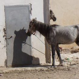 Stop Abuse of Working Animals in Ancient Tourist City