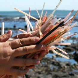 Stop Choking the Oceans With Plastic Straws