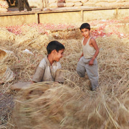 End Abusive Labor of Thousands of Children