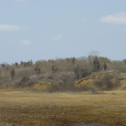End Deforestation to Protect Rare Forests of Ecuador