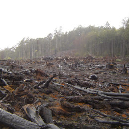 Stop Illegal Loggers From Destroying Ancient Woodlands